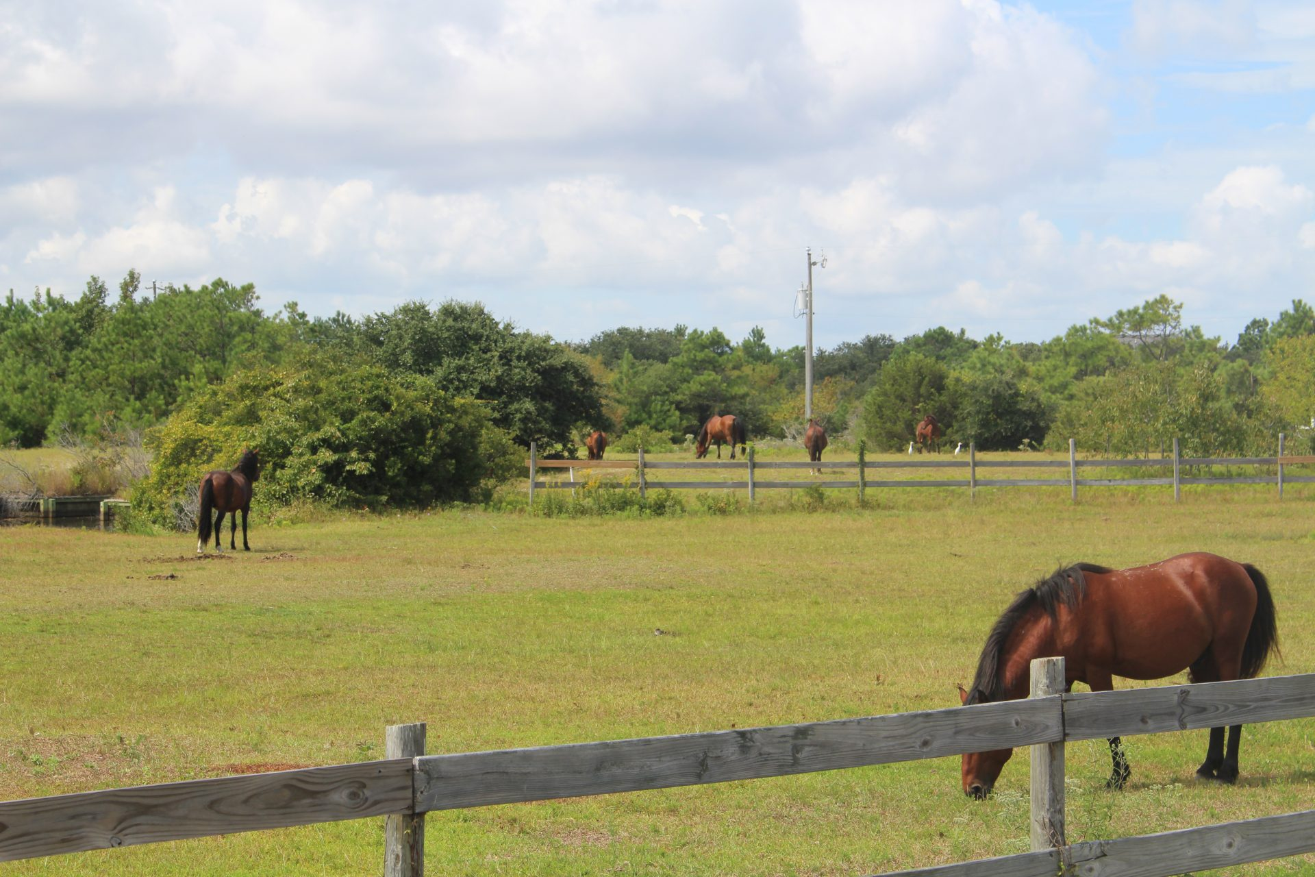 Horses, Outer Banks