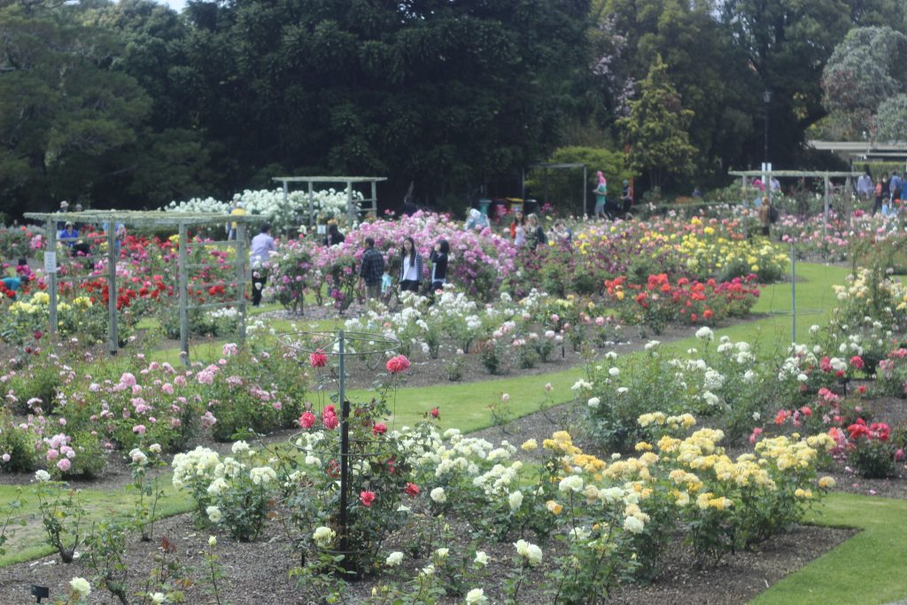 The Parnell Rose Garden is a breath of fresh air from the city - and one of the top things to do in Auckland.