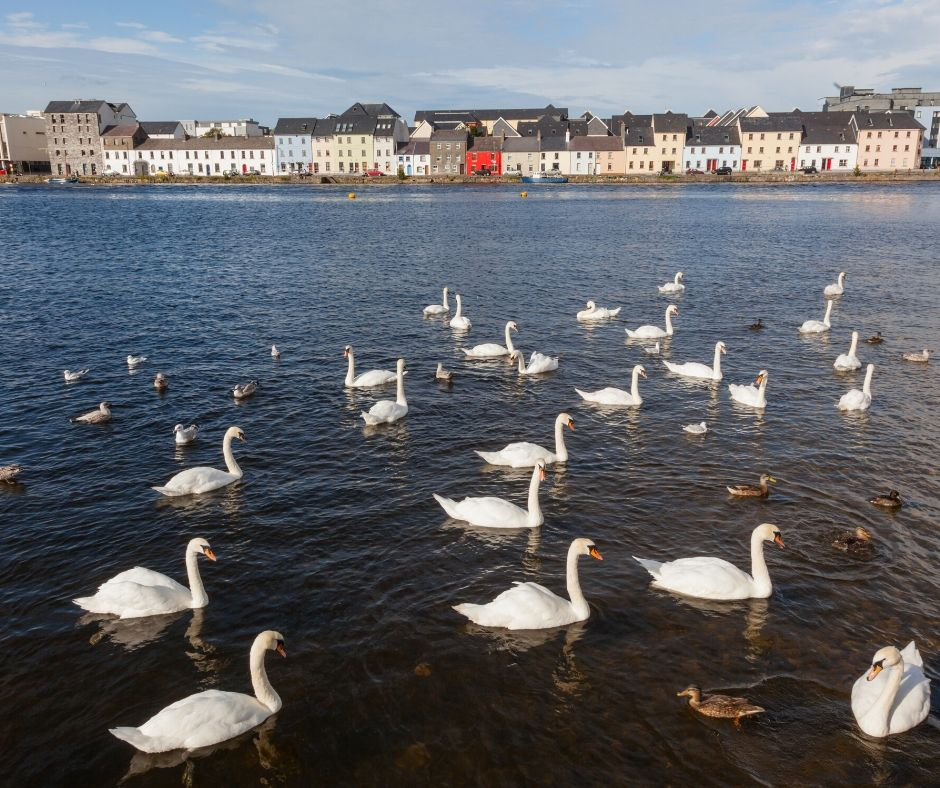 Colorful homes and swans make the Long Walk a  great place to visit during 2 days in Galway