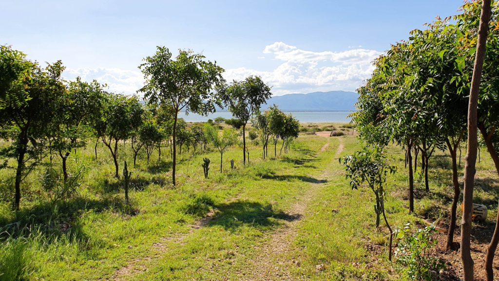 An orchard with a mountain in the background, Tanzania