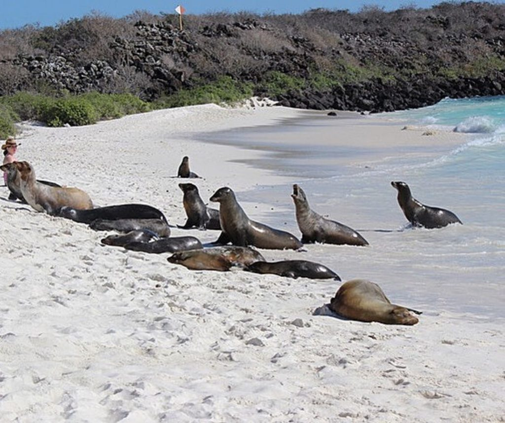 Seeing wild sea lions is a great ethical animal encounter.
