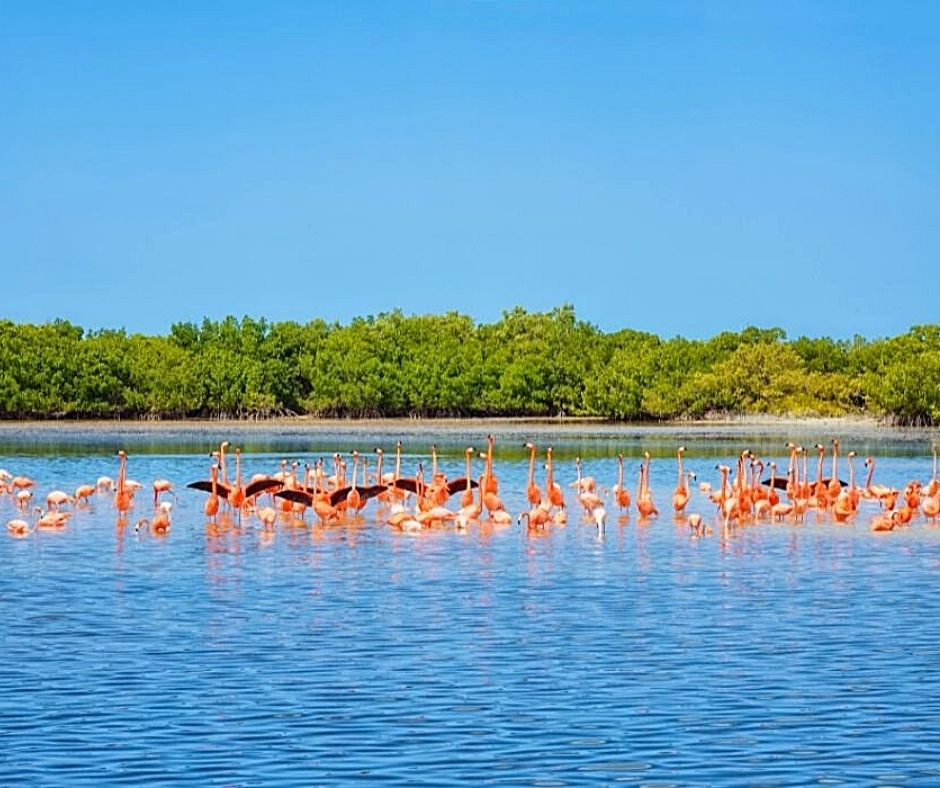 Seeing wild flamingos in Mexico is a great ethical animal encounter.