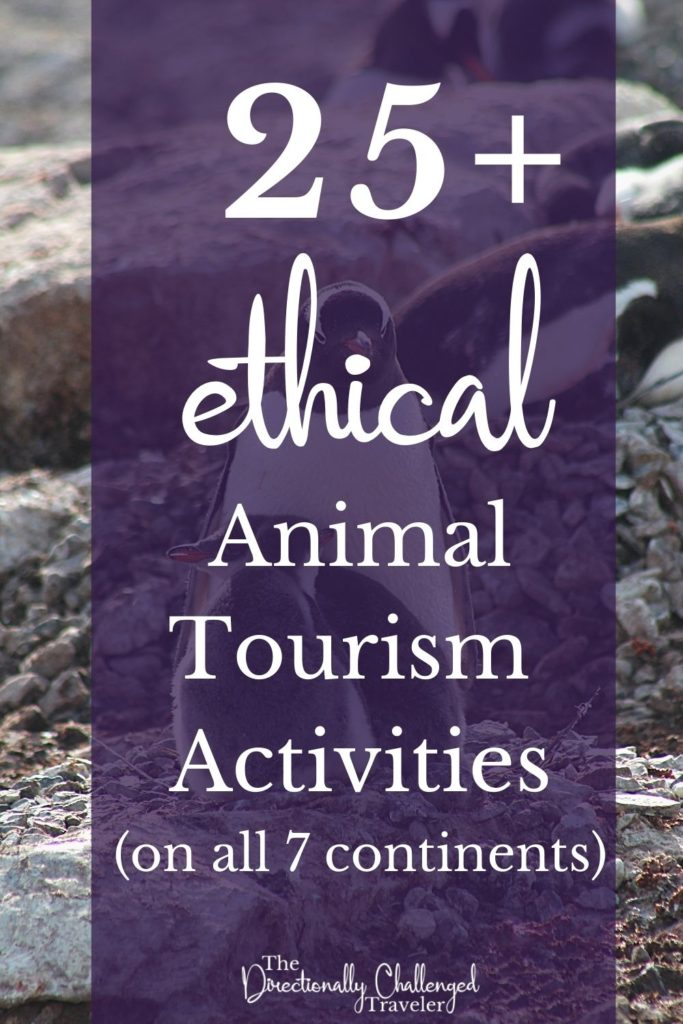 Best Ethical Animal Encounters Around the World