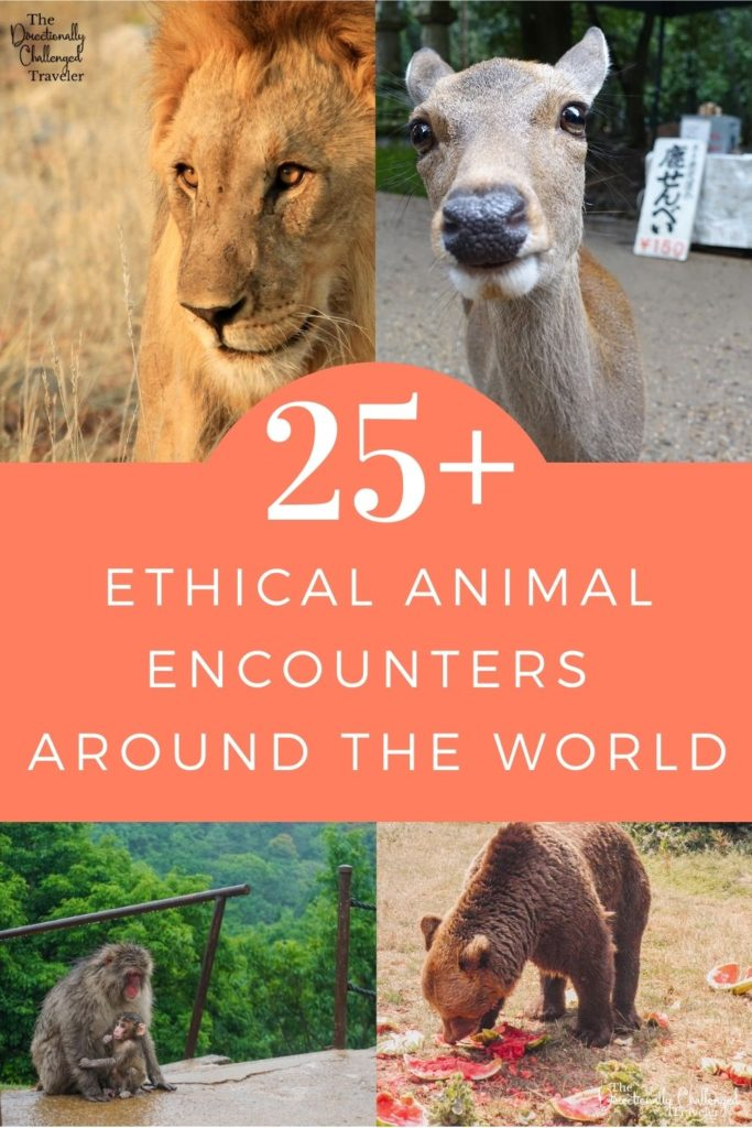 25+ Best Ethical Animal Encounters Around the World
