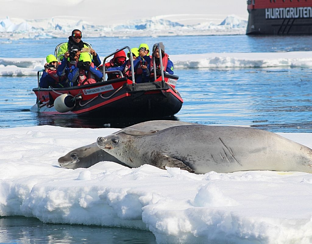 A zodiac boat getting close to a seal. tips for wildlife photography.